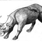 Ox Startle