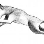 Wolf Thrusts